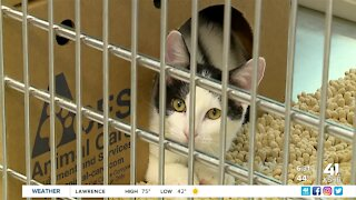 KC Pet Project takes in more than 450 pets over 10-day span