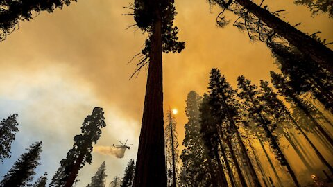 Experts Are Studying Past Wildfires To Aid Future Forest Survival