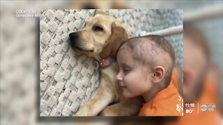 Make-A-Wish grants 6-year-old Sarasota girl a new puppy