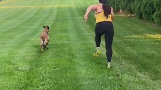 Belgian Malinois proves he is the perfect workout partner
