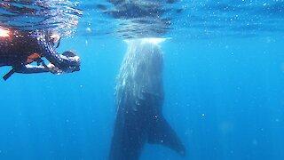 Wildlife videographers capture unusual whale shark feeding behavior