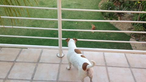 Clever dog uses stairs to fetch ball