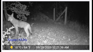 Insane variety of wildlife captured on security cam in a single night