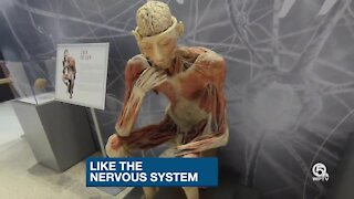 See inside the human body at the South Florida Science Center