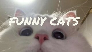 Super funny cats speaking english.