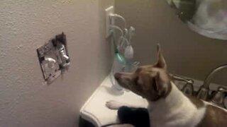 Cane caccia i topi di casa