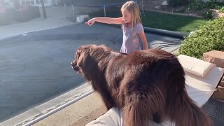 Newfoundland Loves Spending Time Outdoors With His Friend