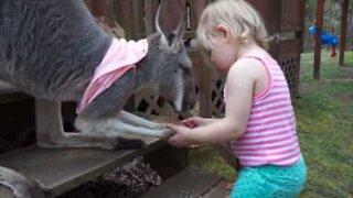 This family has a pet kangaroo