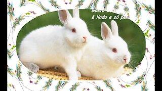 Você é como um coelho: Gosta de uma cenoura, e só pensa naquilo! [Frases e Poemas]