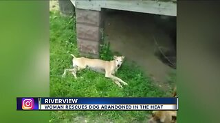 Woman rescues dog abandoned in the heat