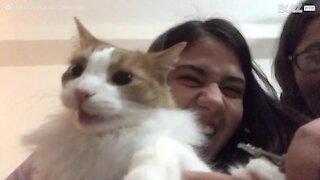 Un chat terrifié qu'on lui coupe les griffes