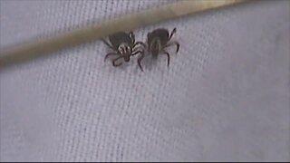 Tips for keeping ticks away