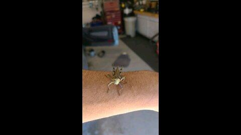 My little grasshopper friend