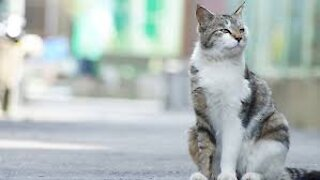 Cat attacks passers-by for no reason