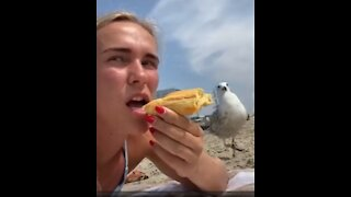 Try Not To Laugh   Random Funny Videos  
