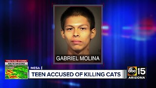 Teen accused of killing cats