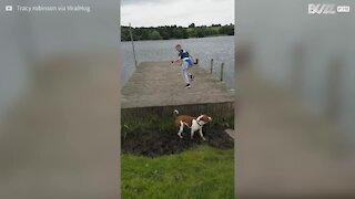 Cane cerca di saltare il pontile, ma batte la testa