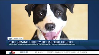 Cutie Boy is looking for a new home at the Humane Society of Harford County