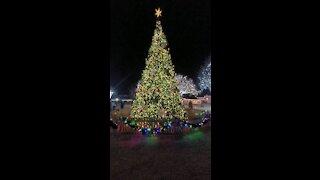 30' Christmas Tree