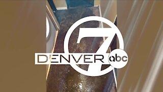Denver7 News 10 PM | Monday, February 1