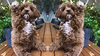Obedient Puppy Already Knows How To Wave Back At Owner