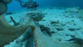 Camera shy octopus attacks filmmaker