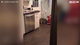 Un raton affamé cambriole une maison