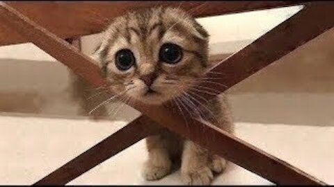 Cute funny cat - amazing Funny video