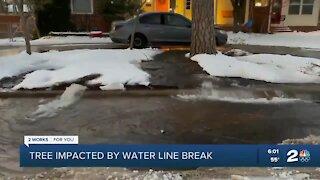 Tree impacted by water line break