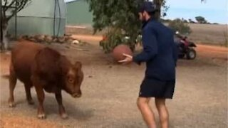 Bull plays basketball with owner