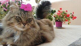 Adorable cat, Little Princess