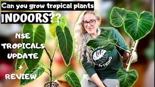 Can You Grow Tropical Plants Indoors | NSE Tropicals review
