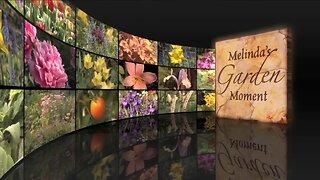 Melindas Garden Moment