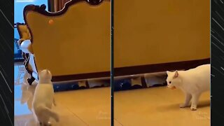 This cat tries to catch the ping pong ball