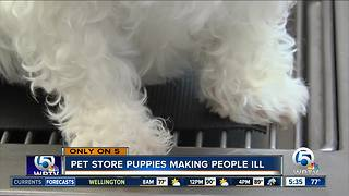 Pet store puppies making people ill