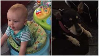 Baby tror at hunden er hans mor