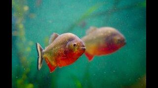 Aquarium open to the public! 🐠🐟