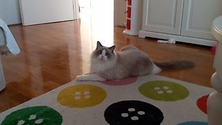 Cat Has Hilarious Energy Burst After Eating Tuna