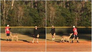 Deer joins baseball game