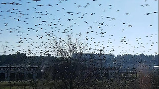 Big group of birds flying away simultaneously