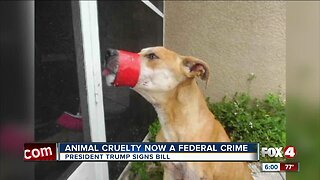 Animal cruelty becomes federal crime