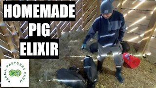 How We Keep Our Pigs Healthy