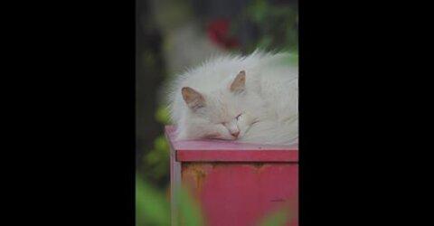 Survival Skill: Sleep