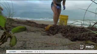 How to volunteer for a local beach cleanup Saturday morning