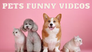 Funny Pets Animals Compilation