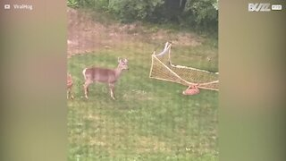 Baby deer trapped in netting rescued by homeowner
