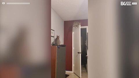 Gato escala porta para apanhar traça! 1