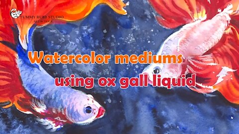 How to use watercolor medium: ox gall liquid for Siamese fighting fish painting