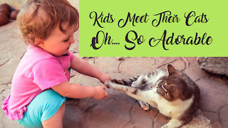 Cats + Babies = Funniest Moments ever