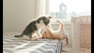 Funny cats Try not laugh